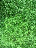 Grüne Natur Lizenzfreies Stockfoto