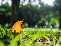 Grüne Naturhintergrundtapete Lizenzfreies Stockfoto
