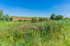 Grüne Naturlandschaft mit vielen Anlagen und Blumen Lizenzfreie Stockfotos