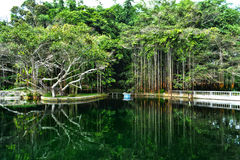 Grüne Naturreflexion Stockbild