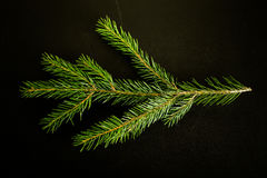 Grüne neue Niederlassung von Cristmas-Baum auf einem schwarzen Hintergrund Bille Lizenzfreie Stockbilder