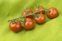 Grüne Niederlassung mit kleinen Tomaten Stockfotos