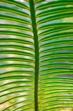 Grüne Niederlassungen Stockbild