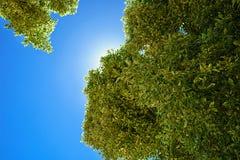 Grüne Niederlassungen auf dem Hintergrund des blauen Himmels Lizenzfreie Stockbilder