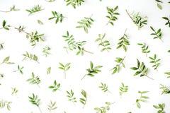 Grüne Niederlassungen auf weißem Hintergrund Lizenzfreie Stockfotos