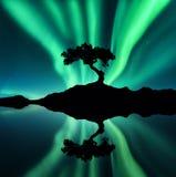 Grüne Nordlichter und Schattenbild eines Baums auf dem Felsen Stockfotos