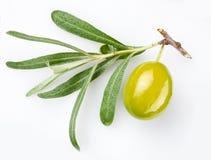 Grüne Olive auf Zweig Lizenzfreies Stockbild