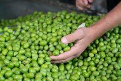 Grüne Olive für Erdölgewinnung Lizenzfreies Stockfoto