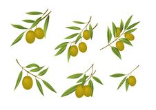 Grüne Oliven lizenzfreie abbildung