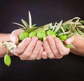Grüne Oliven in der männlichen Hand auf dunklem Hintergrund mit Kopienraum Stockfoto