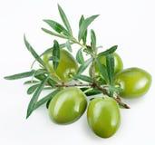 Grüne Oliven mit einem Zweig Stockfotografie
