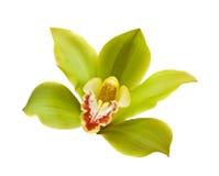 Grüne Orchidee. stockfoto