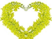 Grüne Orchidee Lizenzfreies Stockbild