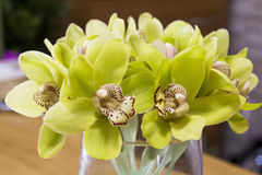 Grüne Orchidee, phalenopsis Stockfoto
