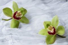 Grüne Orchideen - lokalisiert - weißer Hintergrund lizenzfreies stockbild