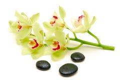 Grüne Orchideen mit Massagesteinen Stockfotografie