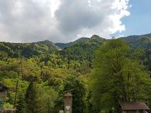 Grüne Palette von Bäumen stockfotografie