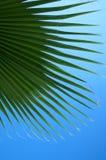 Grüne Palmblätter Stockbild
