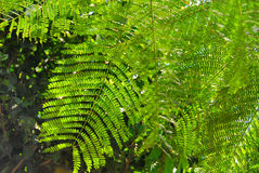 Grüne Palmblätter Stockfotos