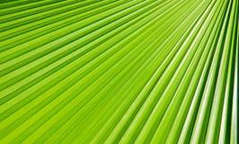 Grüne Palmblätter lizenzfreies stockfoto