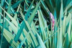 Grüne Palmblätter und Blume stockbilder