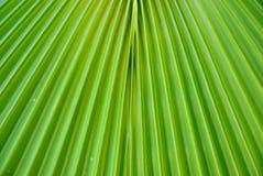 Grüne Palmblattbeschaffenheit Lizenzfreie Stockfotos