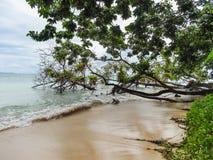 Grüne Palme auf der Küste von La miel Panama stockfoto