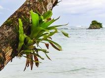 Grüne Palme auf der Küste von La miel Panama stockfotografie