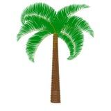 Grüne Palme auf einem weißen Hintergrund Stockfoto