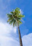 Grüne Palme auf Hintergrund des blauen Himmels Lizenzfreies Stockbild