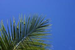 Grüne Palme auf Hintergrund des blauen Himmels Einzelnes Palmblatt Blaues getontes Foto des Aqua Stockfotos