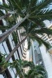 Grüne Palme auf Hintergrund des blauen Himmels und modernem Gebäude Stockbild