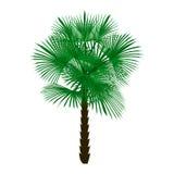 Grüne Palme auf weißer Hintergrundillustration Stockfotos
