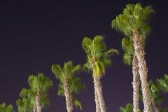 Grüne Palmen Lizenzfreies Stockfoto