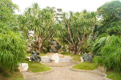 Grüne Palmen Stockbild