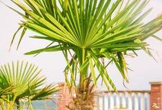 Grüne Palmen lizenzfreie stockbilder
