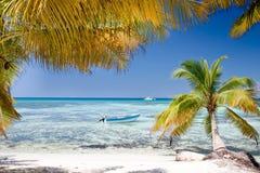 Grüne Palmen auf weißem Sand setzen unter blauem Himmel auf den Strand Lizenzfreies Stockfoto