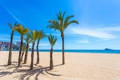 Grüne Palmen auf weißem Strand mit Meer und Gebäuden Lizenzfreies Stockbild