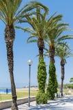 Grüne Palmen in Folge auf einem Hintergrund des blauen Himmels Lizenzfreies Stockbild