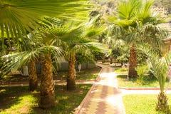 Grüne Palmen nahe dem Weg Hei?es Wetter des Sommers Feiertage und tropisches Ferienfoto relax Sonniger Lebensstil an der Küste lizenzfreie stockfotografie