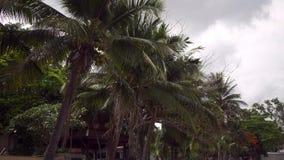 Grüne Palmen und bewölkter regnerischer Himmel, Thailand stock video footage