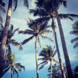 Grüne Palmen und Himmel mit Wolken Stockfotos