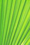 Grüne Palmenbeschaffenheit Lizenzfreies Stockbild