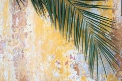Grüne Palmenniederlassung auf einer orange Wand der alten gebrochenen Weinlese als touris Stockfoto