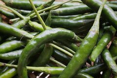 Grüne Paprikas so frisch stockfoto