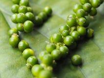 Grüne Pfeffer Stockfotografie