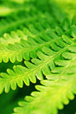 Grüne Pflanzenblätter Lizenzfreie Stockfotos