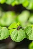 Grüne Pflanzenblätter Stockfoto