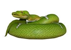 Grüne Pythonschlange auf Weiß Lizenzfreies Stockbild