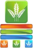 Grüne quadratische Ikone - Korn stock abbildung